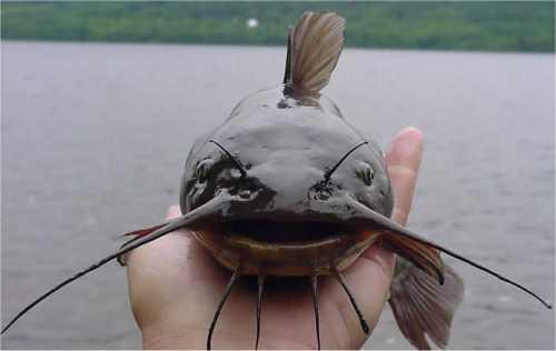Seerosen kois teichtechnik teichtiere und teichpflanzen for Teichfische versand
